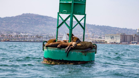 On Earth Day 2021, Marine Life Thriving at Port of Los Angeles